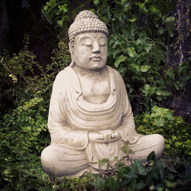 Buddha Serene
